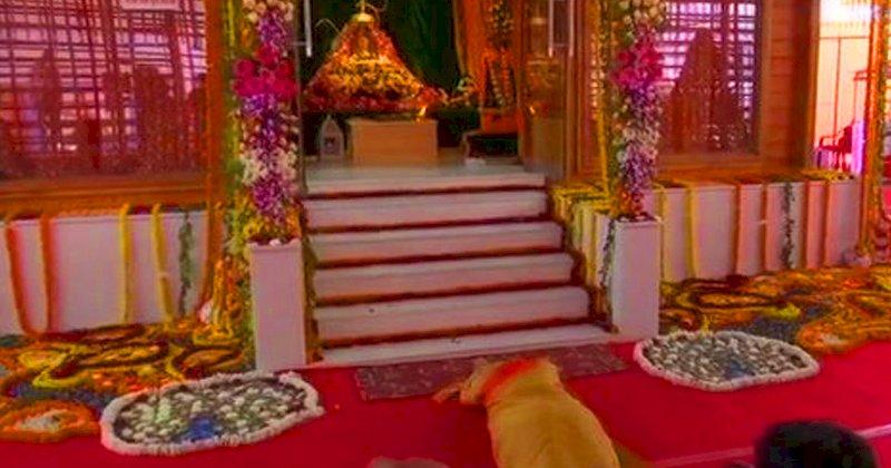 मोदी ने रामलला के किए दर्शन-आरती, साष्टांग प्रणाम किया