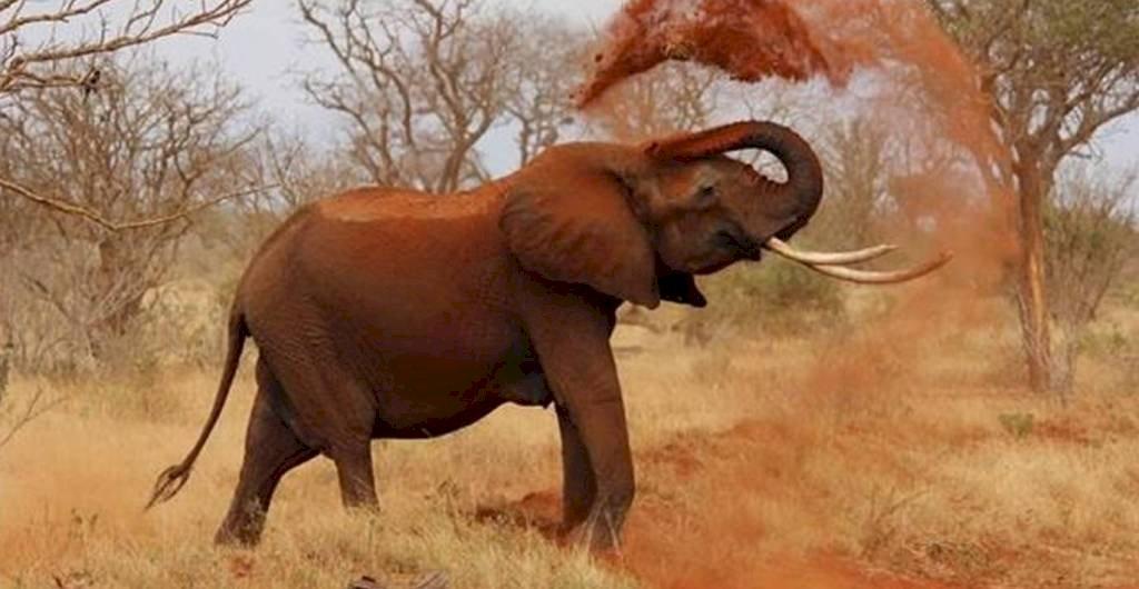 पन्ना टाइगर रिजर्व में हाथी को आया गुस्सा और फिर...
