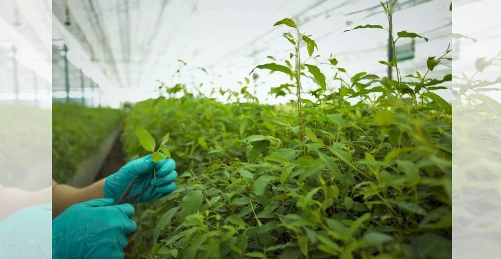 11 राज्यों के किसान यूपी में सीख रहे हैं हर्बल खेती की तकनीक
