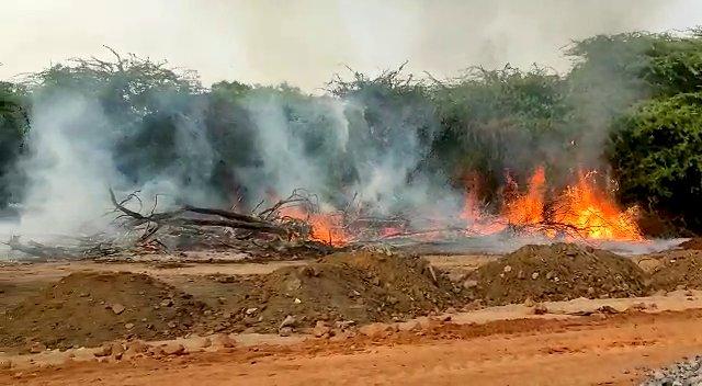 झांसी : कटे हुए पेड़ों के तने से लगी जंगल में आग