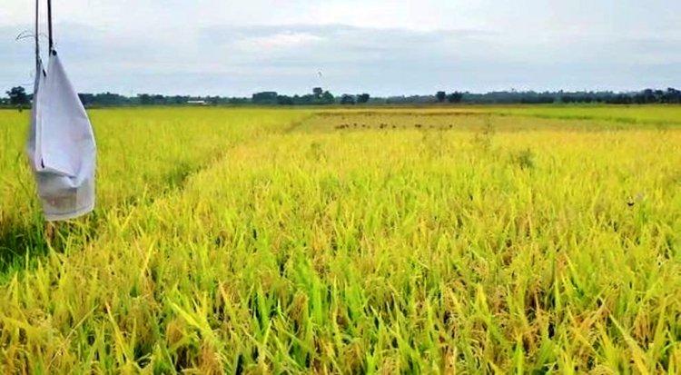 कोरोना काल में कृषि क्रांति, हजारों किसान हो रहे आत्मनिर्भर