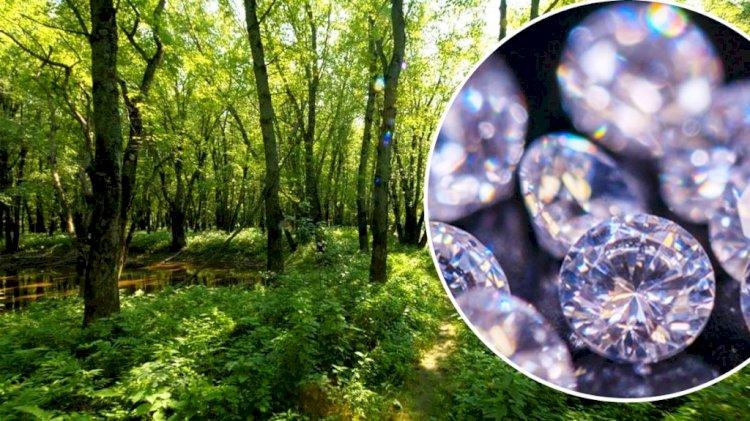 बुन्देलखण्ड में बक्सवाहा जंगल के ढाई लाख से ज्यादा पेड़ों को बचाने की मुहिम तेज