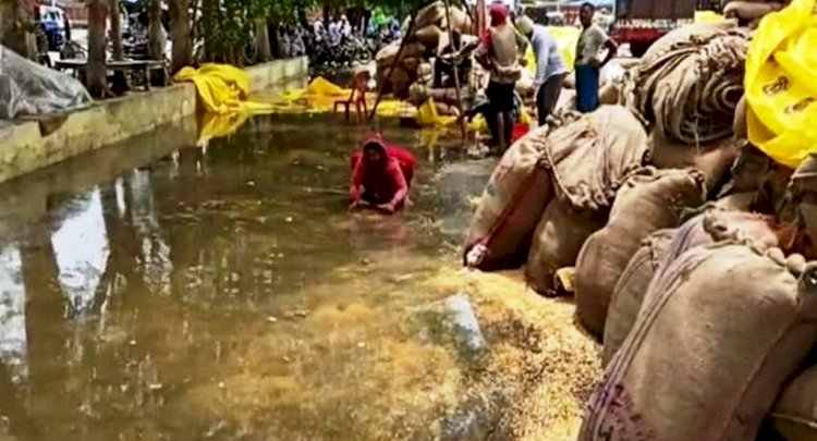 हमीरपुर में मूसलाधार बारिश, मंडी में बहा किसानों का अनाज, ढहे कच्चे मकान