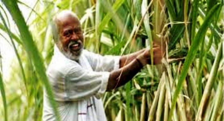 उप्र में टिश्यू कल्चर तकनीक से करायी जा रही गन्ने की खेती