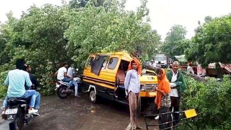 चलती गाड़ी में गिरा पेड़, लेखपाल सहित आधा दर्जन घायल