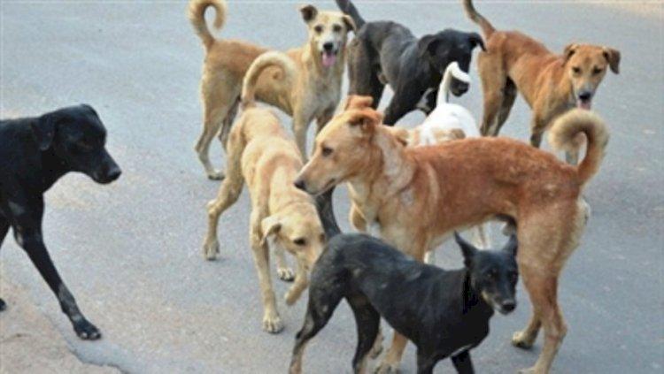 ग्राम प्रधान की तहरीर पर दफनाए गए कुत्तों को बाहर निकालकर होगा पोस्टमार्टम